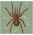 a spider anatomy include all name