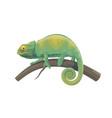chameleon lizard green tropical reptile animal vector image