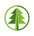 Green round Christmas tree icon on white vector image
