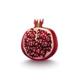 realistic detailed 3d pomegranate half vector image vector image