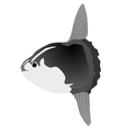 sunfish vector image vector image
