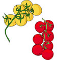 two tomatoes branch yellow and red vector image vector image