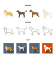 collie labrador boxer poodle dog breeds set vector image