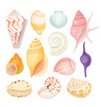 sea shells set on white vector image