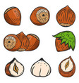 set of hazelnuts icons isolated on white vector image vector image
