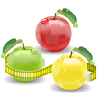apple weight loss vector image vector image