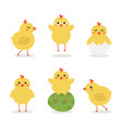 easter baby chicken characters vector image