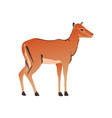 portrait of a standing impala africa mammal wild vector image