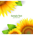Banner floral background or template card with vector image
