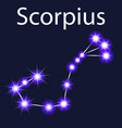 constellation scorpius with stars in the night sky vector image vector image