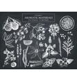 hand drawn perfumery ingredients sketch vector image vector image