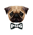 realistic pug dog portrait vector image