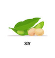 soy beans organic healthy vegetarian food on white vector image