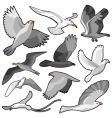 bird set vector image vector image