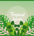 green palm branches decoration tropical leaves vector image vector image