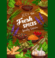 spices herbs vegetable seasonings and condiments vector image vector image