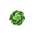 top view green houseplant icon plant in pot vector image vector image