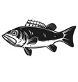 sea bass icon perch design element for logo vector image vector image