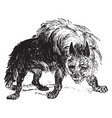 striped hyena vintage vector image vector image