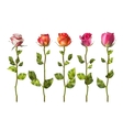 Colorful roses set flowers EPS 10 vector image