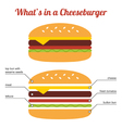 Flat design cheeseburger infographic vector image