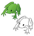 frog in both color green tones and black outline vector image