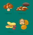 piles of different nuts hazelnut peanut walnut vector image vector image