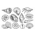 seashells set in sketch style sea shell vector image vector image