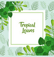 tropical leaves template fashion green design vector image vector image