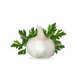 garlic and a sprig of parsley on a white vector image