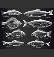 hand drawn fish sketch various fish salmon and vector image vector image