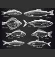 hand drawn fish sketch various fish salmon vector image vector image