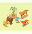 pet shop isometric background vector image vector image