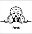 poodle - peeking dogs - breed face head isolated vector image