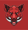 angry wild boar head vector image vector image