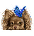 chihuahua dog with a butterfly wall sticker vector image vector image