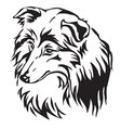 decorative portrait of dog sheltie vector image vector image