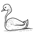 drawing swan on white background vector image vector image