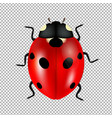 ladybug isolated in transparent background vector image