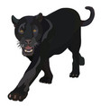 realistic black panther vector image
