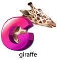 A letter G for giraffe vector image vector image