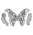 butterfly or wild moths and caterpillars insects vector image
