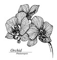 orchid flowers phalaenopsis in blossom vector image vector image