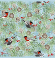 winter pine branches bullfinches and red berries vector image vector image