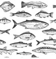 fish seamless pattern hand drawn different sea vector image vector image