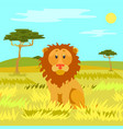 lion sitting calmly on dry grass wild nature vector image vector image