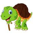 elderly tortoise vector image