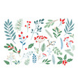 winter berries and leaves vector image vector image