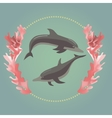Two dolphins with the seaweeds vector image