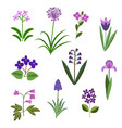 violet flowers vector image vector image